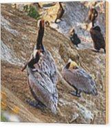 Brown Pelicans At Rest Wood Print