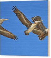 Brown Pelicans In Flight Wood Print