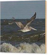 Brown Pelicans In Flight Wood Print