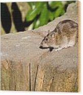 Brown Rat On Log Wood Print