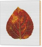Brown Red And Yellow Aspen Leaf 1 Wood Print
