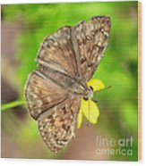 Brown Skipper Butterfly Square Wood Print