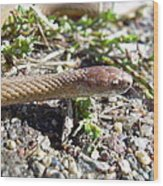 Brown Snake Wood Print