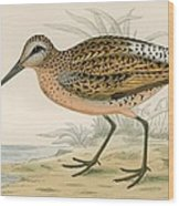 Brown Snipe Wood Print