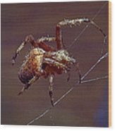 Brown Spider Wood Print