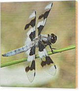 Brown Striped Double Winged Dragonfly Wood Print