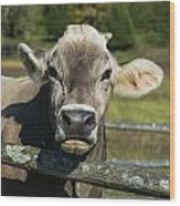 Brown Swiss Cow Wood Print