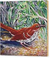 Brown Thrasher In Sunlight Wood Print