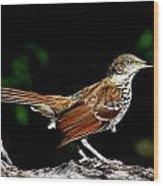Brown Thrasher On Limb Wood Print