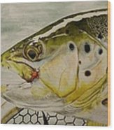 Brown Trout Wood Print