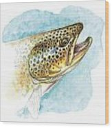 Brown Trout Study Wood Print