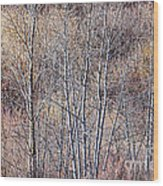 Brown Winter Forest With Bare Trees Wood Print