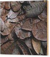 Browns Wood Print