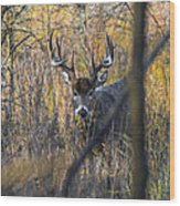 Brush Buck Wood Print