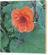 Bryan's Poppy Wood Print