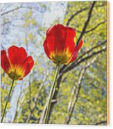 Bryant Park Tulips New York  Wood Print