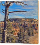 Bryce Canyon Cliff Tree Wood Print