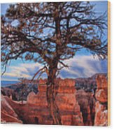 Bryce Canyon Middle Tree Wood Print