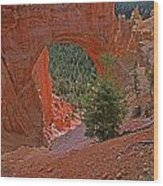 Bryce Canyon Natural Bridge And Tree Wood Print