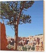 Bryce Canyon Pine Wood Print