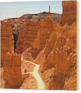 Bryce Canyon Trail Wood Print