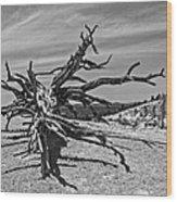 Bryce Canyon Tree Art Wood Print