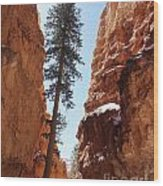 Bryce Canyon Wall Street Wood Print