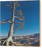 Bryce Tree Wood Print
