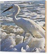 Bubbles Around Snowy Egret Wood Print