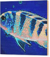 Bubbles - Fish Art By Sharon Cummings Wood Print