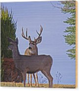 Buck And Doe In Yard Wood Print