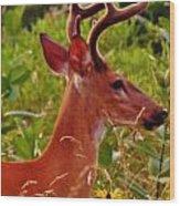 Buck Wood Print