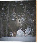Buck I Wood Print