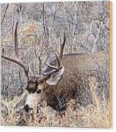 Buck In The Rutt Wood Print