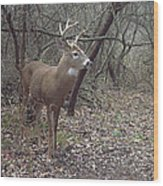 Buck In The Woods Wood Print