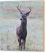 Buck Looking For A Doe Wood Print