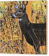 Buck Scouting For Doe Wood Print