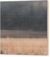 Buck Whitetail Deer Crossing Field Wood Print
