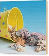 Bucket Of Seashells Still Life Wood Print