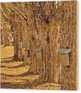 Buckets Of Gold Wood Print by Melanie Leo