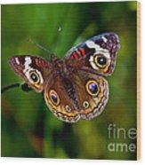 Buckeye Butterfly Wood Print