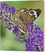 Buckeye Butterfly On Purple Flowers Wood Print