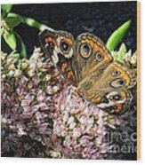 Buckeye Butterfly On Sedum Wood Print