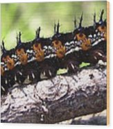 Buckeye Caterpillar 2 Wood Print