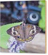 Buckeye I Wood Print