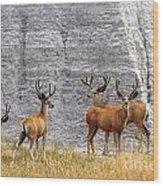 Bucks Abound Wood Print