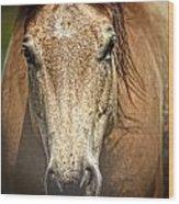 Buckskin Stallion Wood Print