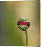 Bud  Wood Print