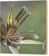 Bud Star Wood Print