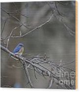 Budding Bluebird Wood Print